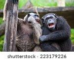 Common Chimpanzee Sitting Next...