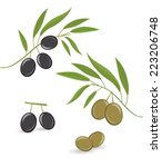 vector black and green olives | Shutterstock .eps vector #223206748