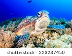 green turtle on the sea bed | Shutterstock . vector #223237450