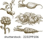 set of the vegetables | Shutterstock .eps vector #223299106