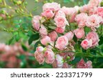 background of bouquet of pink... | Shutterstock . vector #223371799