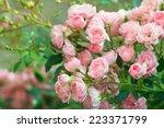 background of bouquet of pink... | Shutterstock . vector #223371799