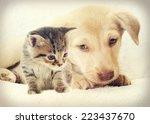 Stock photo kitten and puppy 223437670
