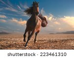 Stock photo running horse with streamed mane sunset time and sand 223461310
