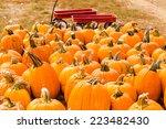 Pumpkin Patch On Sunny Autumn...
