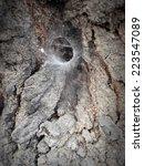 Spider Web On Old Tree Bark