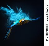 Flying Ara Parrot Over...
