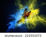 flying ara parrot over... | Shutterstock . vector #223551073