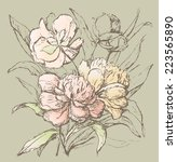 bouquet of the peonies | Shutterstock .eps vector #223565890