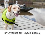 Dog Wears Life Jacket  Ready...