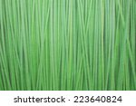 background papyrus green plant