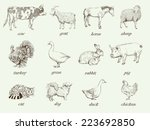 farm animals. set of vector... | Shutterstock .eps vector #223692850