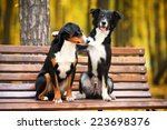 Two Dogs Sitting On A Bench In...