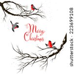 Winter Birds On Branches....