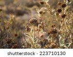 Dry Plants In Crete
