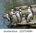 Group Of Seven Endangered...