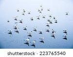 seagulls at beach   Shutterstock . vector #223765540