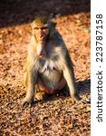monkey sitting on the ground  | Shutterstock . vector #223787158