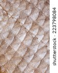 Small photo of Fish scales of bream (Abramis brama L.)