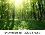 beautiful green forest | Shutterstock . vector #223857658
