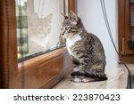 Stock photo small grey pet kitten starring out apartment window 223870423