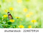 Monarch Butterfly With Reed Of...