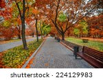 autumn alley in the park   Shutterstock . vector #224129983