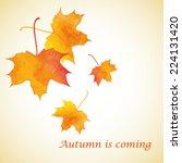 watercolor golden autumn leaf... | Shutterstock .eps vector #224131420
