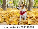 Stylish Dog With Red Bandanna...