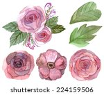 set of flowers and leaves... | Shutterstock . vector #224159506