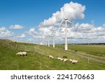 Dutch Pasture With Sheep And...