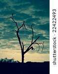 Silhouette Of Tree In...