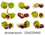 horse chestnut with crust on a... | Shutterstock . vector #224225443