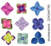 vector of various  hydrangea... | Shutterstock .eps vector #224244790