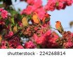 Set Of Tropical Birds ...