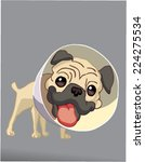pug wearing a space collar ... | Shutterstock .eps vector #224275534