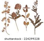 Set Of Wild Dry Pressed Flower...