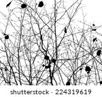 tree branches forest. vector   Shutterstock .eps vector #224319619