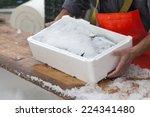 fishermen covering fresh...   Shutterstock . vector #224341480