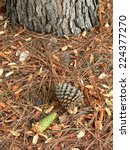 vertical shot of one green and... | Shutterstock . vector #224377270