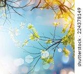 acacia flower  | Shutterstock . vector #224378149