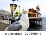 A Seagull At Brighton  Uk....