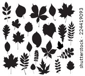 leaf collection   vector... | Shutterstock .eps vector #224419093