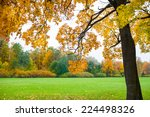 autumn landscape. fall scene....   Shutterstock . vector #224498326