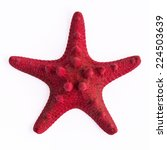 The Red Starfish On The White...