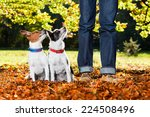 Stock photo two happy dogs with owner sitting on grass in the park looking up 224508496