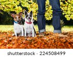 Stock photo two happy dogs with owner sitting on grass in the park 224508499