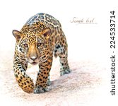 Leopard  Baby Leopard Was...