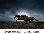 Couple Black Horses Running...
