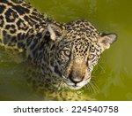 jaguar | Shutterstock . vector #224540758